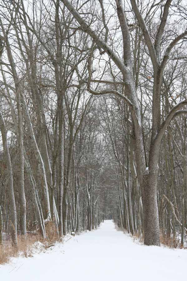 Camp Woodbury driveway in the winter
